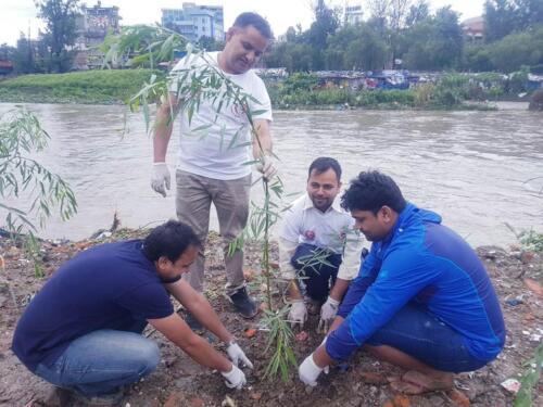 Tree Plantation 2076